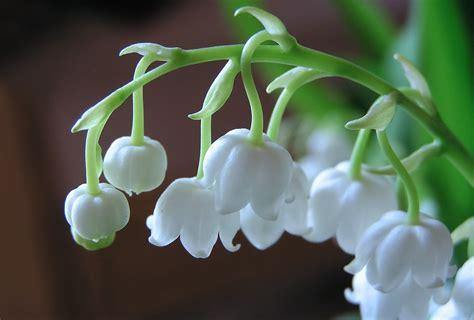 Cara Aman Berhubungan Saat Haid Bunga Dengan Harga Termahal Dan Terindah Di Dunia Fenomagz