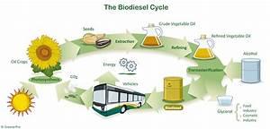Biodiesel Fuel - Alternative Energy