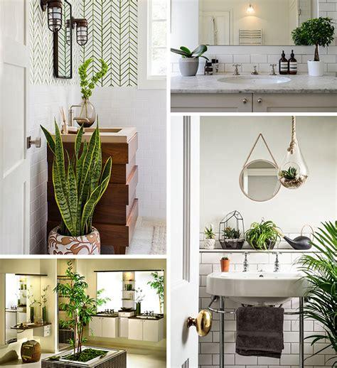 plantes dans la salle de bains la tendance botanique magasinsalledebains be