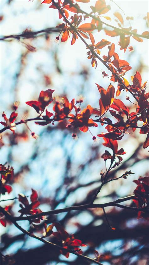 8 Free Autumn Inspired iPhone 7 Plus Wallpapers   Preppy ...