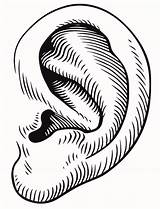 Ear Clipart Ears Clip Cliparts Eye Drawing Mouse Right Listening Mickey Library Cliparting Gclipart Clipartpost Clipartbest Load sketch template