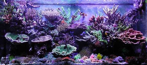 Reef Aquarium Aquascaping by Simple And Effective Guide On Reef Aquascaping Reef
