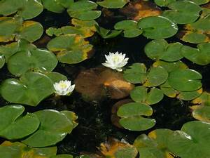 Spare Time for Fish: Prayers and Lily Pads