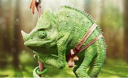 Reptile Animals Chameleons Wallpapers Backgrounds Desktop Wallup