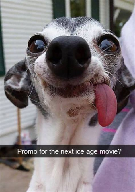 funny snapchat dogs   famepace