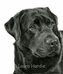 Pencil drawing of a Black Labrador by Laura Hardie | Dog ...