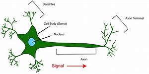 Neuron Diagram Labeled