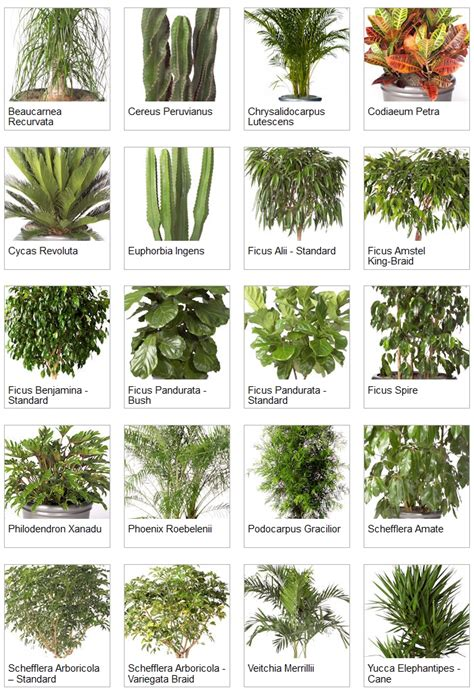 tropical plants list indoor palms identification indoor tropical plants exles of tropical plants mostly