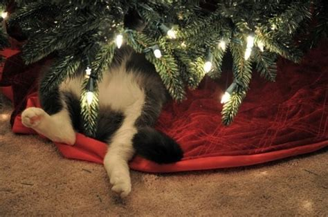 christmas cat tumblr