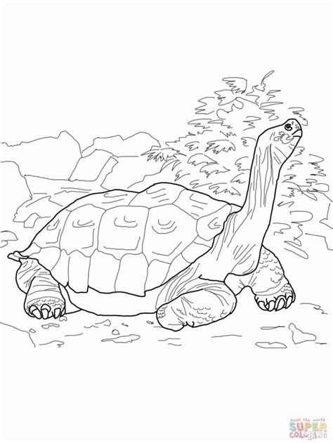 Gala Kleurplaat by Tortoise And The Hare Coloring Page Coloring Home