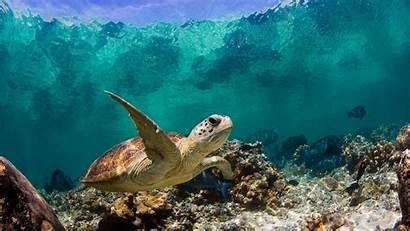 Wallpapers Mar Nature Tortuga Sea Marina Tortugas