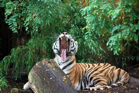 Müde Bin Ich, Geh Zur Ruh Foto & Bild  Tiere, Zoo