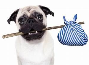 Laisser Un Chien Seul Quand On Travaille : morsure de chien un danger pour l homme et les animaux ~ Medecine-chirurgie-esthetiques.com Avis de Voitures