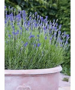 Plante Repulsif Mouche : 8 plantes qui chassent les insectes et les moustiques naturellement ~ Melissatoandfro.com Idées de Décoration