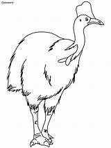Coloring Emu Popular Some sketch template