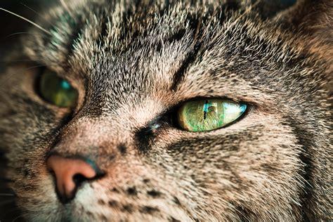 image libre portrait portrait cat nez des yeux