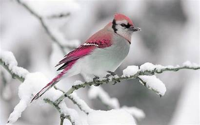 Birds Animals Wallpapers Funmag Tags