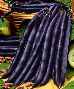 Buy Peas And Beans Now French Bean Standard Purple