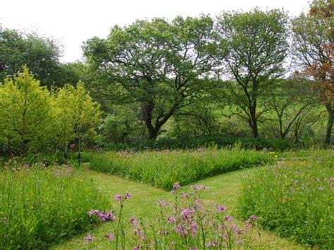 meadow gardens 5 perennials preppers should consider the prepper journal