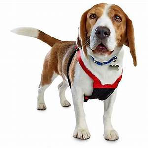 Good2Go Red No Pull Dog Harness | Petco