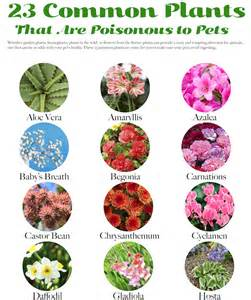 plants poisonous to cats 23 common plants poisonous to pets lakeside garden guild