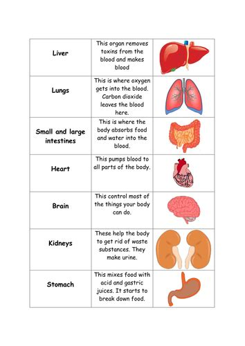 human body organs card sort teaching resources