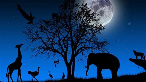 full moon night  jungle animal wallpaper widescreen