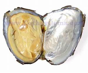 Live Oyster with a Real Pearl inside - INTERNATIONAL ...