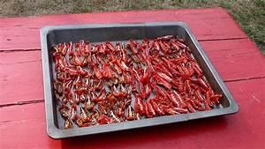 Tomaten Selber Anbauen : tomaten s en und pflanzen anleitung f r eine gesunde kultur ~ Orissabook.com Haus und Dekorationen