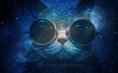Free Animated Cat Wallpaper - free space cat wallpapers high definition 171 wallpapers