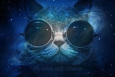 HD Wallpapers Iphone 5 Space Cat Wallpaper
