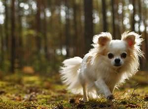 Hund In Mietwohnung Trotz Verbot : kleine hunderassen und ihre unterschiede zooroyal magazin ~ Lizthompson.info Haus und Dekorationen