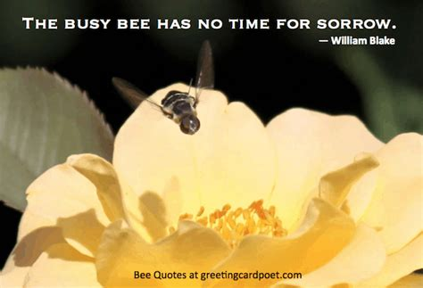 bee quotes  sayings good famous  funny greeting