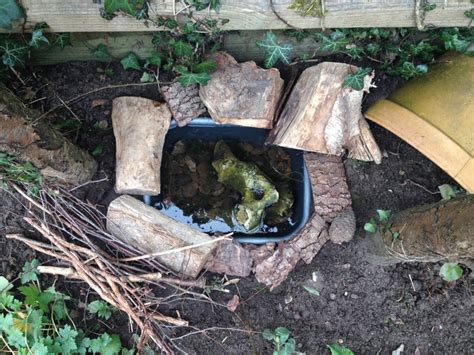 how to make a small garden pond how to make a mini frog pond the small gardener