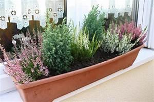Dauerbepflanzung Für Balkonkästen : herbstliche blumenk sten und k bel ~ Frokenaadalensverden.com Haus und Dekorationen