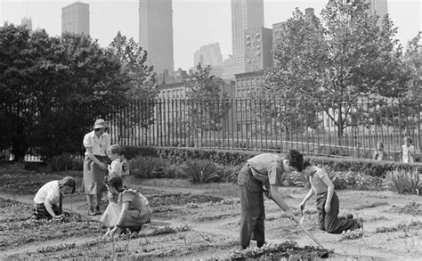 victory garden nyc new york city s 1940s victory gardens yielded a whopping