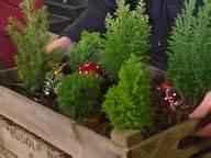 Balkon Bäume Im Topf : mini koniferen statt tannenbaum ratgeber garten zierpflanzen ~ Frokenaadalensverden.com Haus und Dekorationen