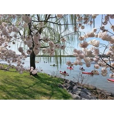 Tour Providers - National Cherry Blossom Festival