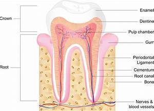 Dental Cavities In Children