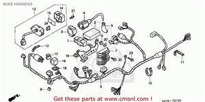 Honda Nx125 Transcity 1995 Italy Wire Harness