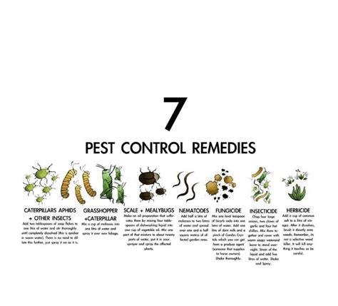 garden pest remedies outdoor living