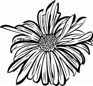 Aster Flower Outline Related Keywords - Aster Flower ...