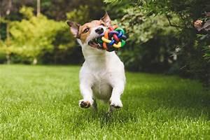 Laisser Un Chien Seul Quand On Travaille : adopter un petit chien halte aux id es re ues jpdc le blog ~ Medecine-chirurgie-esthetiques.com Avis de Voitures