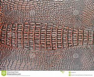 Crocodile Skin Texture Stock Image - Image: 29448791