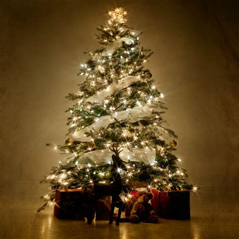 where to place christmas tree this is the best place to put your christmas tree why you shouldn t put your christmas tree by