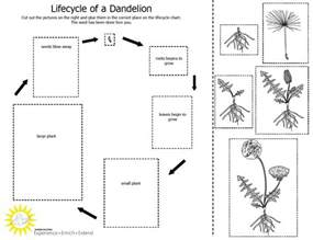 Plants Worksheets Cycle Of A Plant Worksheet Calendar Template Site