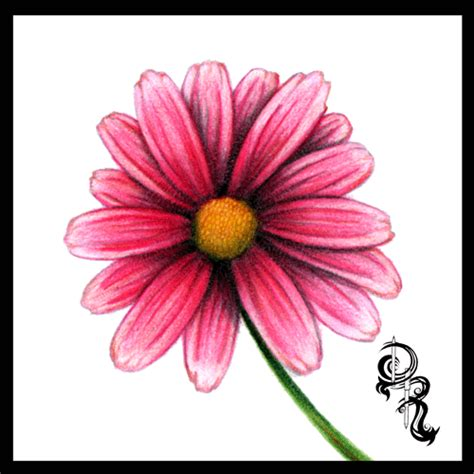 Coloring Flowers With Colored Pencils by Home Dibujos Y Pinturas Color Pencil Pencil