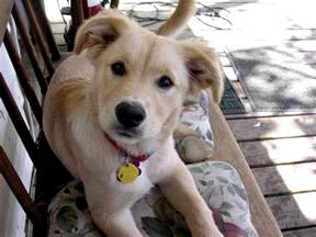 What Is the Cutest Dog Breed in the World