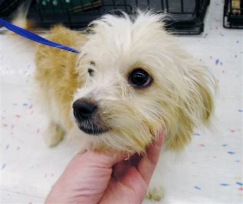 Images Of Mixed Terrier Breeds Summer