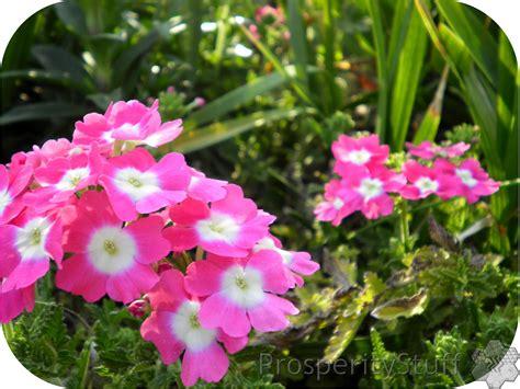 perennials flowers prosperitystuff quilts pink perennials